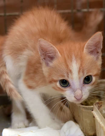 red kitten in a cage in a shelter