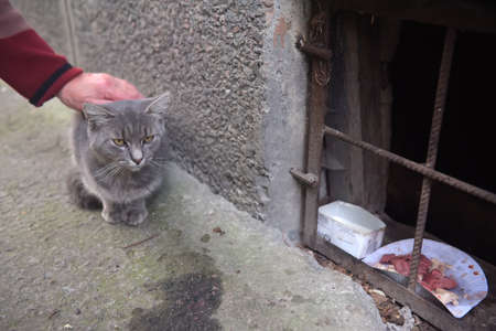 A woman stroking the head of a beautiful stray cat
