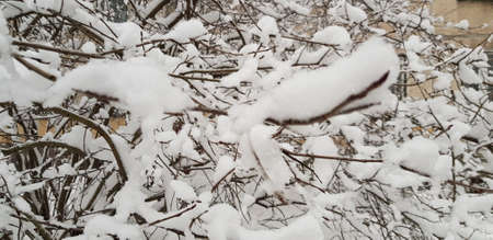 tree branches under a layer of snow in snowfall