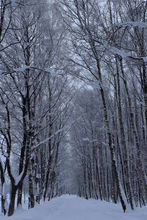 beautiful white snowy forest road Stock Photo