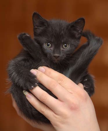 little funny black kitten in the hands in a blue collar around his neck 写真素材 - 121540241
