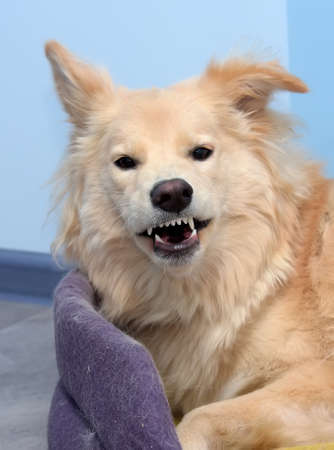 the dog laughs grins looking at the camera