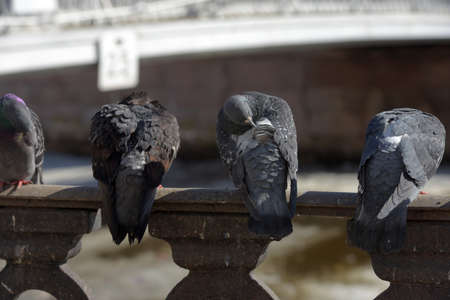 Pigeons on the railing of the promenade