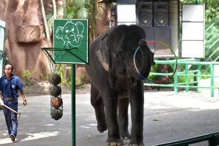 Thailand, Pattaya 24,08,2018 show with elephants at the zoo Редакционное