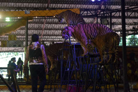 Thailand, Pattaya 24,08,2018 Tigers at a performance at the zoo