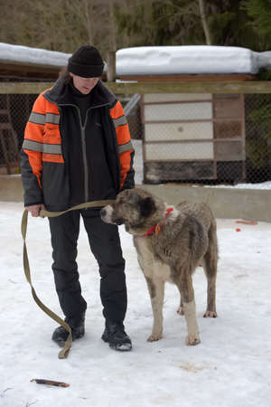 Russia, St. Petersburg 03.03.2019 Shelter for stray dogs of large breeds. Shelter employee with alabai Editorial