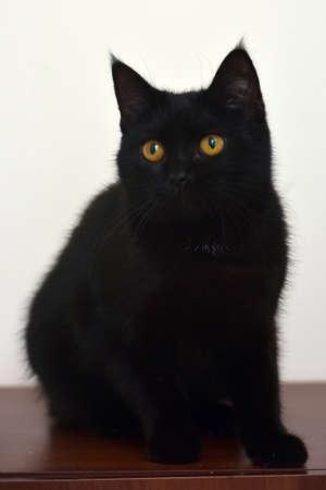 black young cat with orange eyes Foto de archivo - 128745350