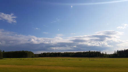 summer field, forest on the horizon and clouds in the sky