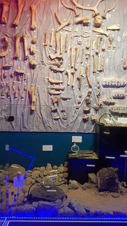 diverse bones of prehistoric animals Reklamní fotografie