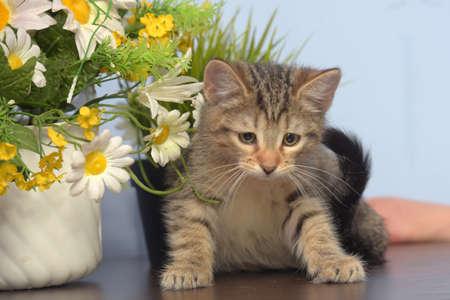 cute little striped kitten and flowers in a pot Фото со стока