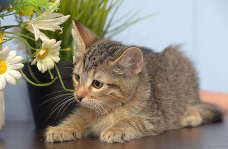 cute little striped kitten and flowers in a pot