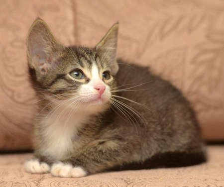 cute little striped kitten with big ears on a brown background