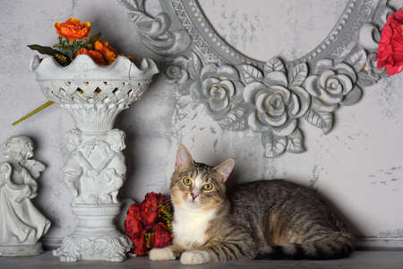 tabby cat and flowers in the studio on a gray background