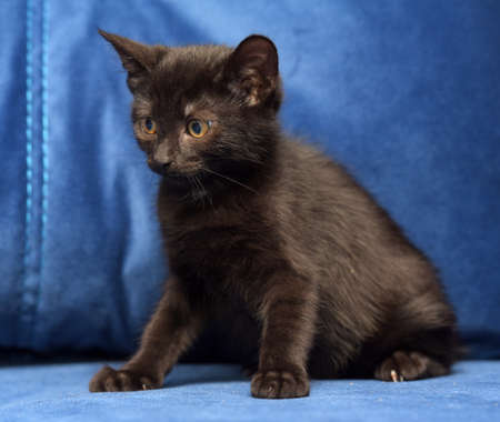 cute black kitten on a blue background