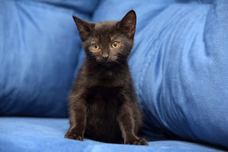 cute black kitten on a blue background