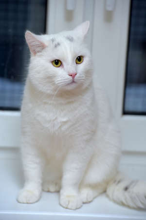 white beautiful cat on a windowsill