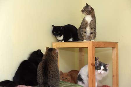 many cats in an animal shelter Zdjęcie Seryjne