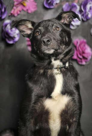 black mestizo dog on a dark background with flowers
