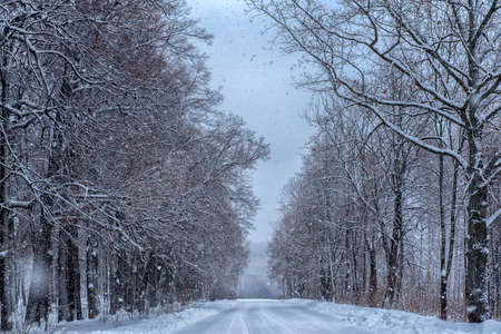 trees along a snowy road in a village