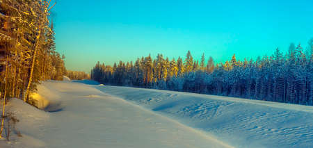 snow-covered expanse and trees in winter