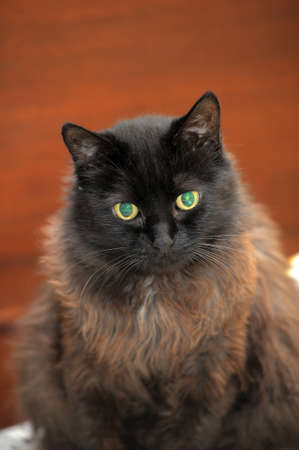 black and brown fluffy cat 스톡 콘텐츠