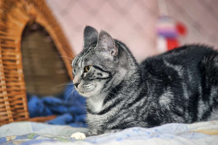 cat with black and gray stripes 스톡 콘텐츠