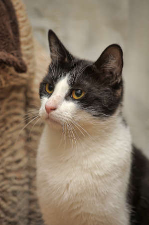 black and white cat in an animal shelter 스톡 콘텐츠