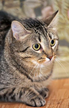 tabby cat with a scared tense look Banque d'images - 141260454