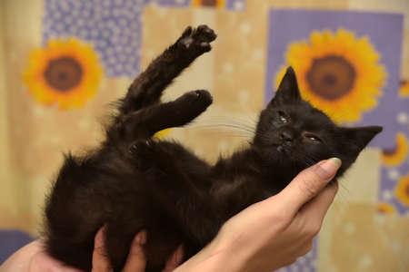 black little kitten in arms