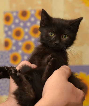 black little kitten in  arms