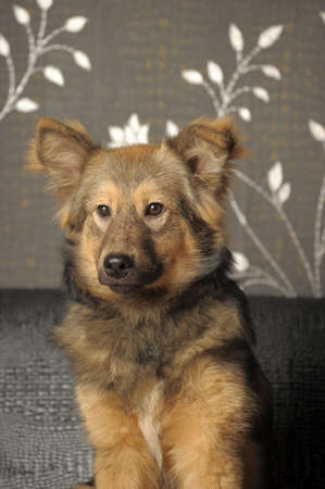 cute young brown dog mongrel