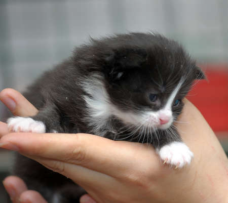 black newborn with white kitten in hands