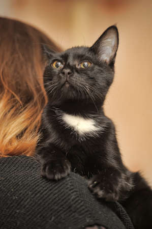 black and white cat on the shoulder