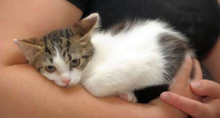 unhappy white with a brown kitten in her arms