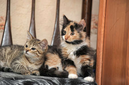 two cute kittens on a chair together