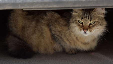 beautiful fluffy stray cat on the street