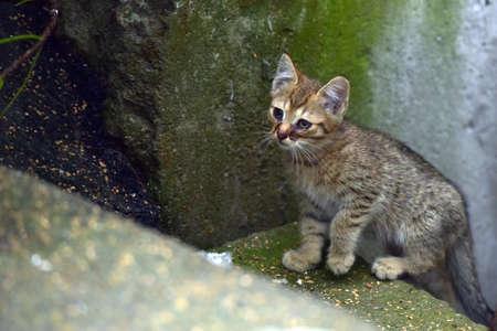 striped homeless kitten outdoors, unhappy