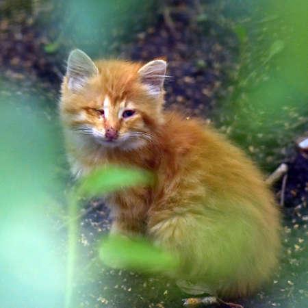 red homeless kitten on the street, unhappy