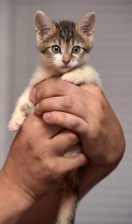 funny little kitten in hands
