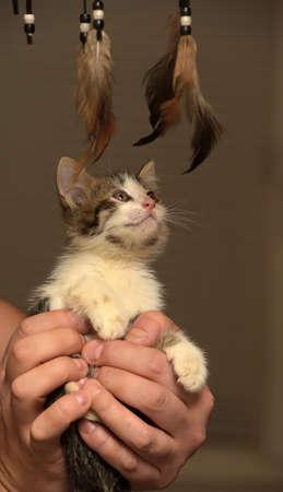 funny little kitten in hands Фото со стока