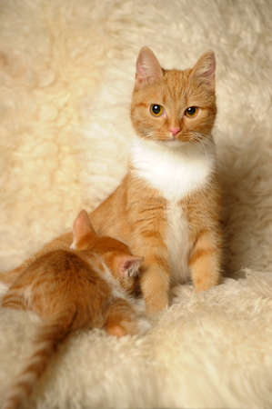 red cat mom with a little kitten