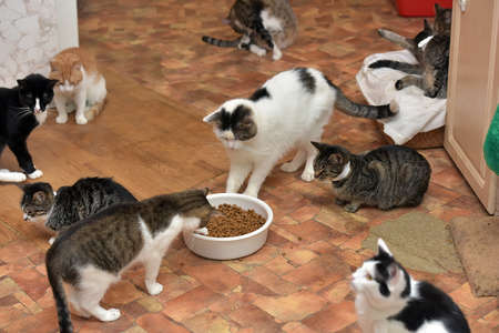 many cats together in an animal shelter