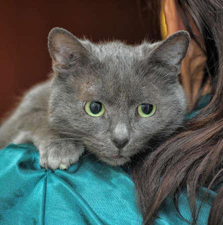 scared sad gray cat in hands