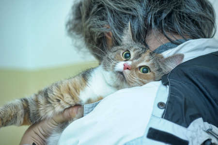 three-color frightened cat in the arms of a volunteer shelter