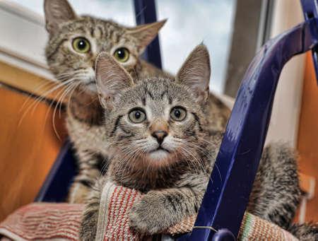 cat mom and kitten together 版權商用圖片