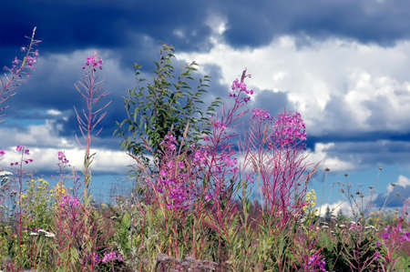 Variety of wild herbs and flowers in a field in summer