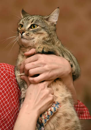 large tabby cat in hands