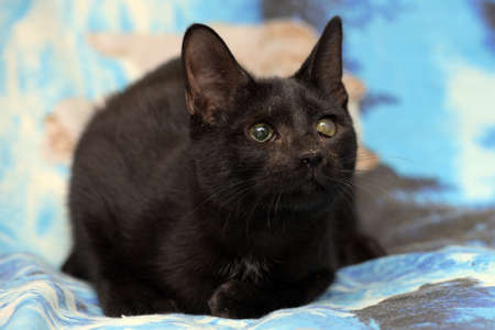 young black cat with cataract eye