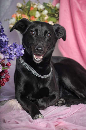 beautiful happy black dog house cur on the background of flowers
