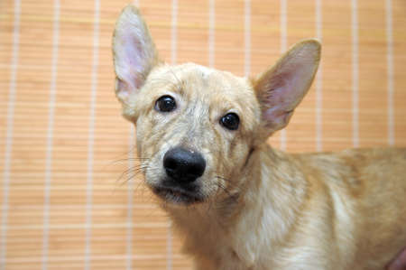 small beige dog in an animal shelter